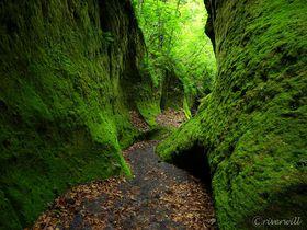 緑のベールに包まれた知られざる北海道の秘境!「苔の回廊」
