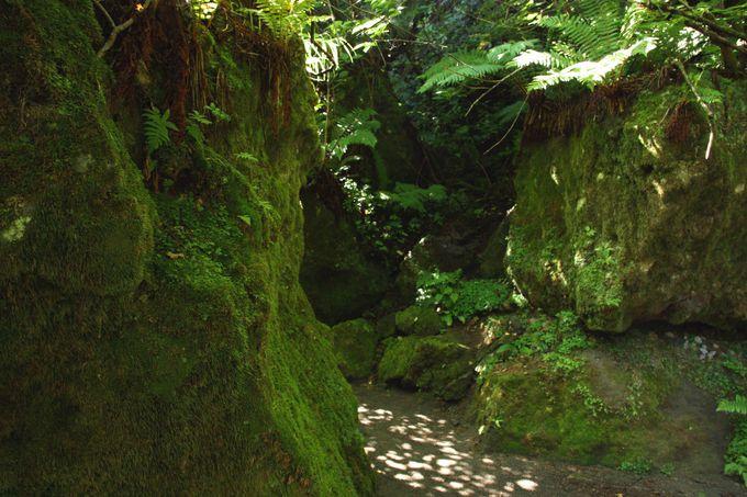約300年前の樽前山噴火から生まれた苔の芸術たち