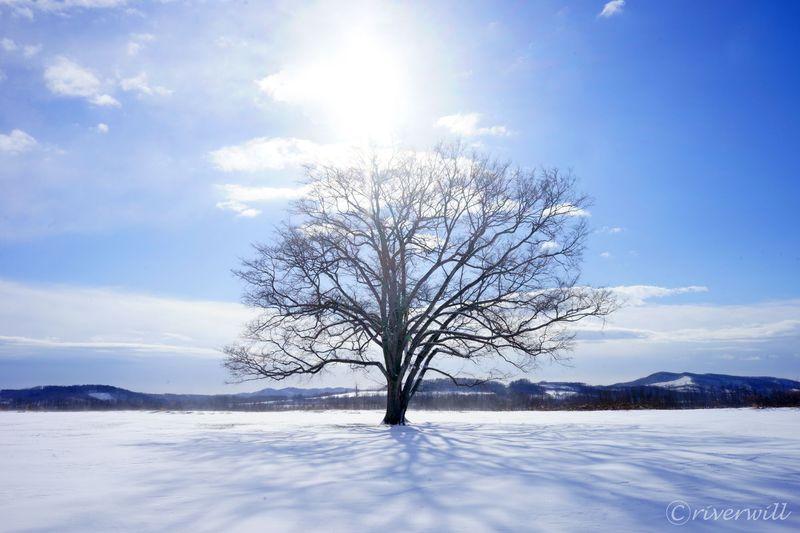 北海道豊頃町もう一つのジュエリー!ハルニレの木でEyes to me