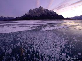 アイスバブルの聖地!カナダ「アブラハムレイク」で神秘の絶景