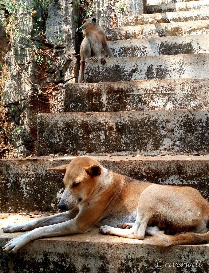 ミャンマーのお寺の特徴と参拝の注意点