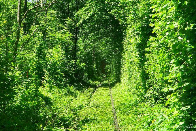 これが恋人たちの聖地!「愛のトンネル」