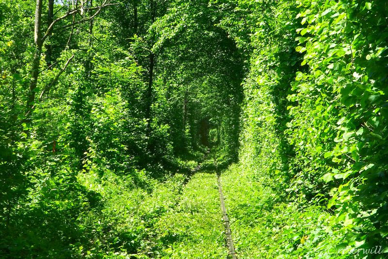 ウクライナの絶景「愛のトンネル」〜緑に包まれた恋人たちの聖地