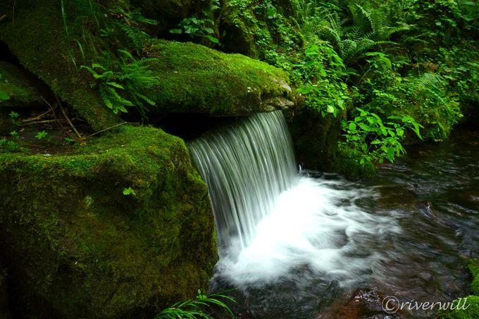 名水が生活用水?!北海道東川町は「上水道のない町」