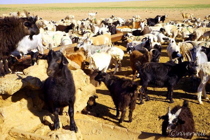 道中出会えるモンゴルならではの絶景