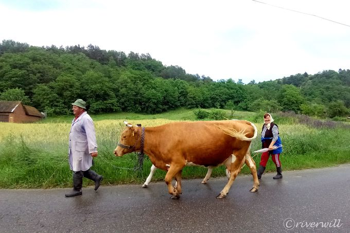 のどかな農村地帯が広がるルーマニア南西部