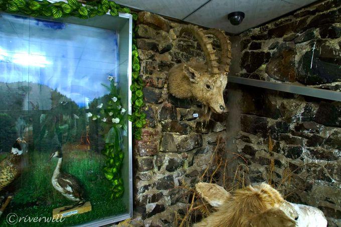 マンズシルの生態系がわかる「マンズシル自然博物館」