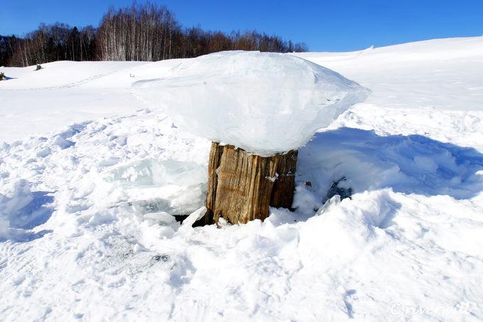 糠平湖でしか見られない「きのこ氷」も必見