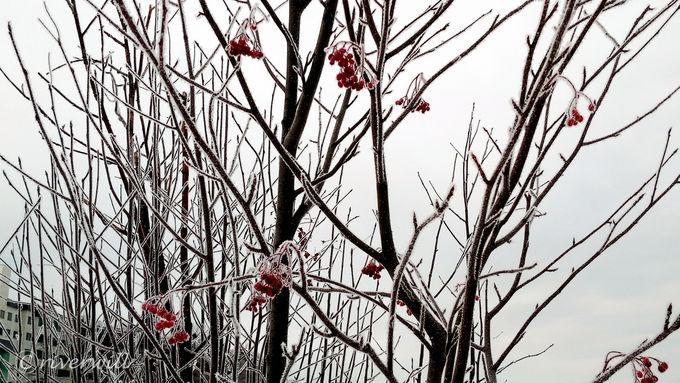 阿寒湖では霧氷やダイヤモンドダストも鑑賞できる!