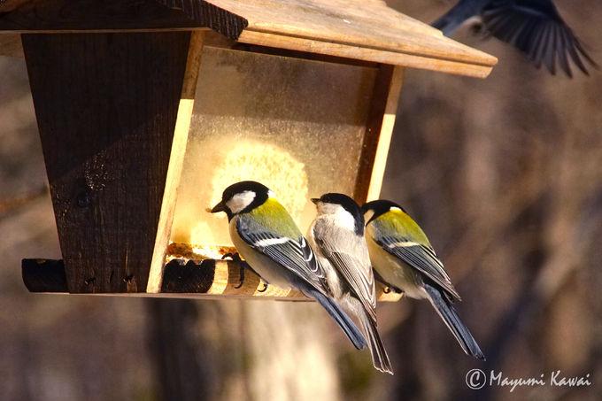 野鳥観察ができる人気のカウンター席