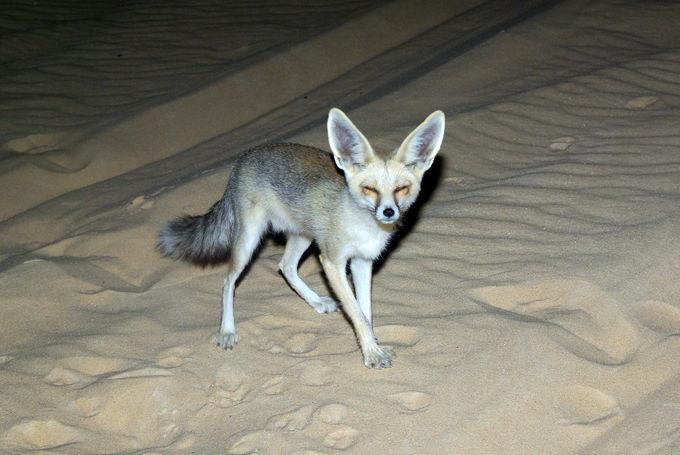 白砂漠で星空キャンプを楽しもう!