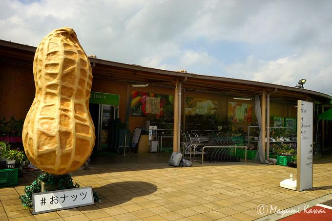 ナッツの里、千葉県道の駅「木更津うまくたの里」とは