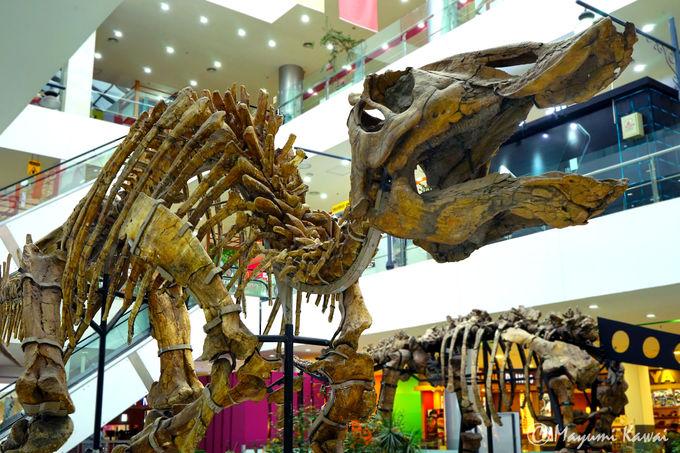 ショッピングモールに本物の恐竜!「フンヌーモール」