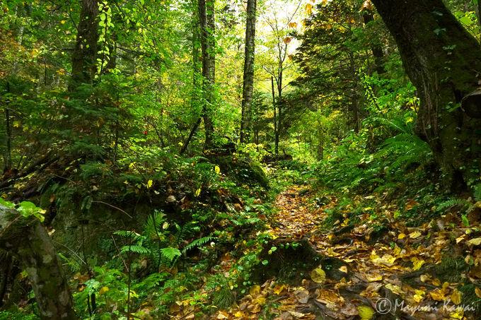 オホーツクの森にひっそりたたずむ「山彦の滝」