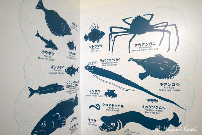 小田原自慢の魚が味わえる「漁港の駅TOTOCO小田原」