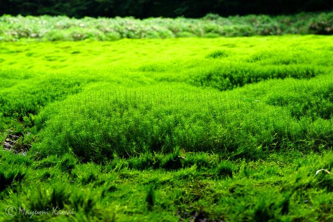 幻の「神の庭」!笹倉湿原とは