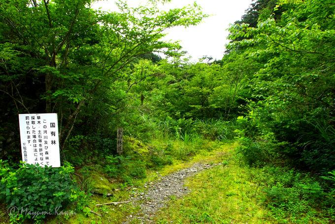 笹倉湿原へのトレッキングコースガイド