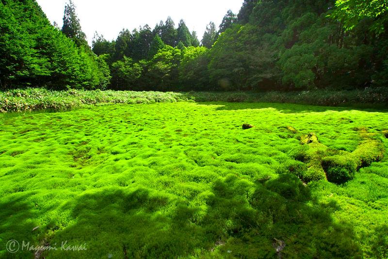 まさに神の庭!幻の湿原といわれた愛媛「笹倉湿原」