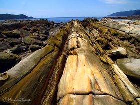 竜の眠る海岸!?土佐清水がおくる天下の奇岩奇勝「竜串海岸」