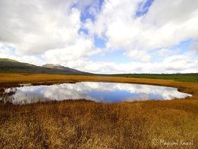 北海道の尾瀬!燃える草紅葉「雨竜沼湿原」で天空トレッキング