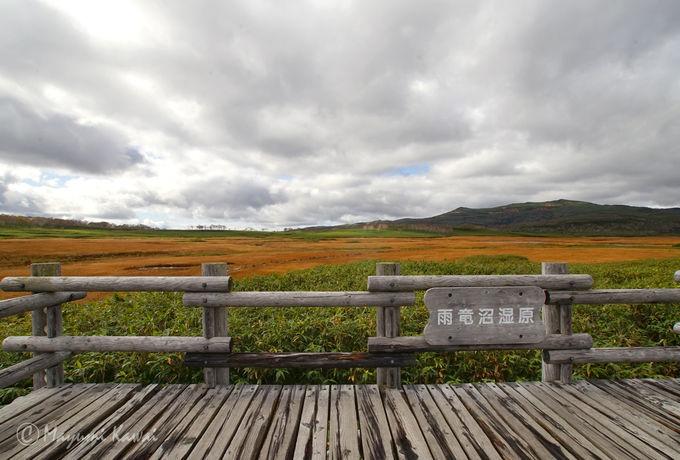 湿原テラスから眺望を楽しもう