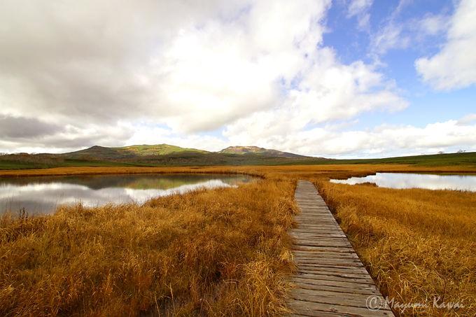 北海道の尾瀬!日本有数の高層湿原「雨竜沼湿原」とは