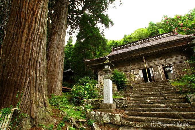 長谷寺の見どころ紹介