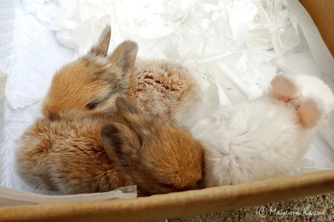 草取りウサギさんと副住職見習いさん