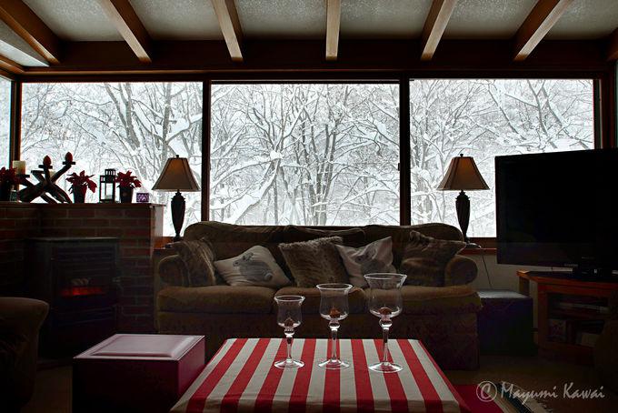 まるで絵画のような美しさ!窓から眺めるブナの森は必見