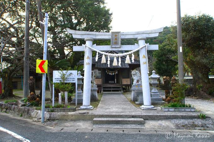 他のアコウもすごい!全国3位を誇る永目神社のアコウの木
