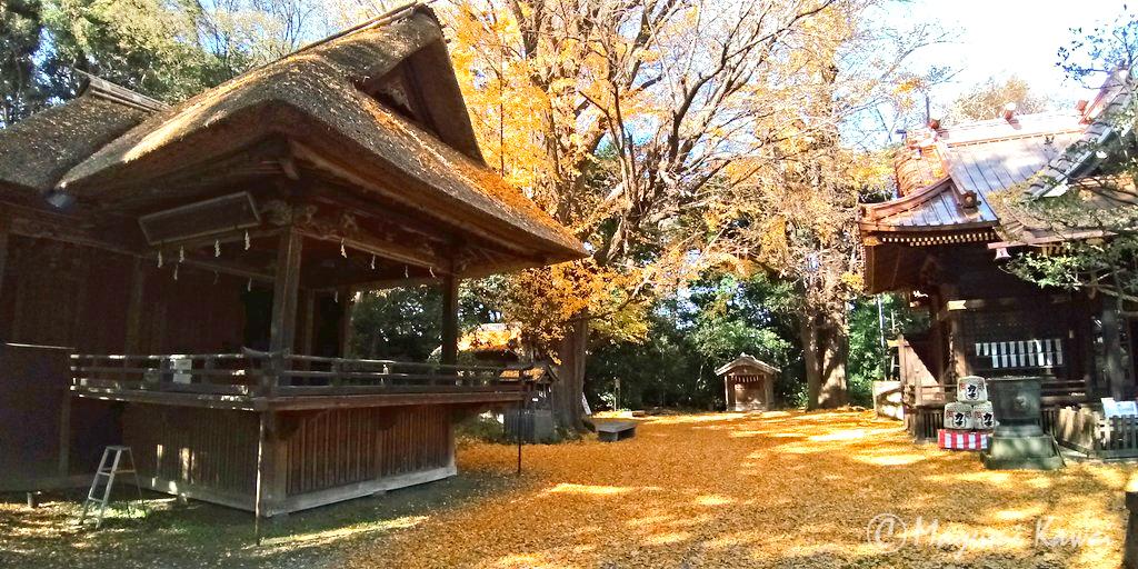 藤だけじゃない 四季折々の表情が楽しめる玉敷神社