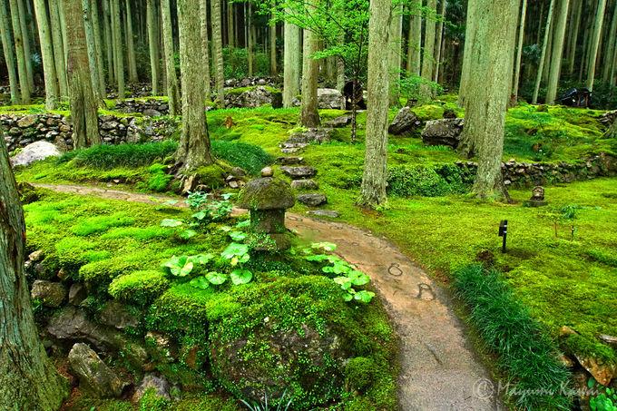 一面苔に覆われた安らぎの空間「こけむしろ」とは
