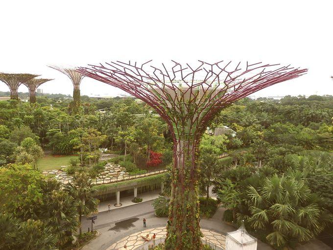 シンガポールをお安くお得に旅するコツ