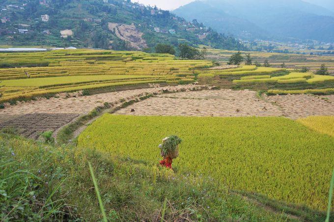 ネパール都市部での服装は?季節ごとに紹介