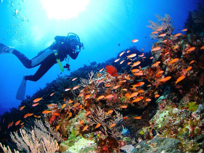 スキューバダイビングで海の世界の奥深さを知る