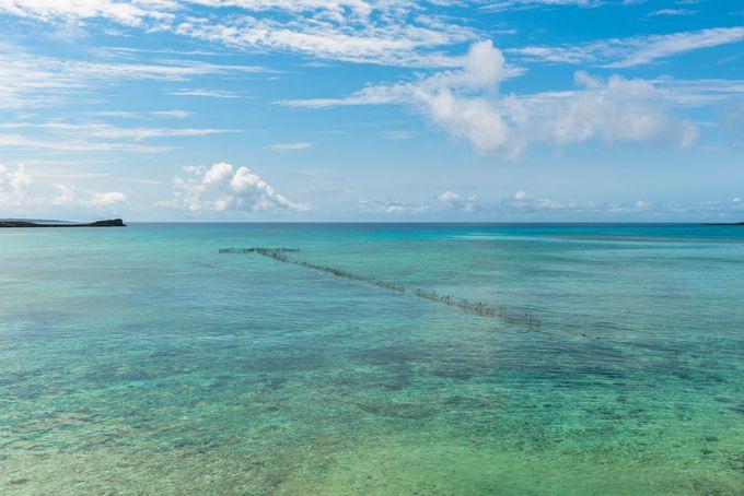 夏の沖縄旅行では何がおすすめ?