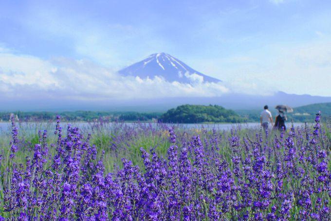 7月は富士山に登る?それとも富士山を眺める?
