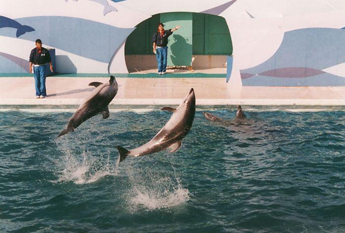 夏休みは鴨川シーワールドで海を丸ごと楽しもう!