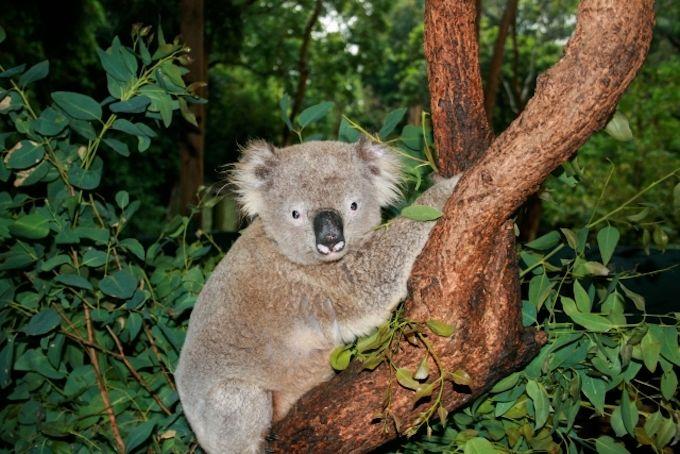 オーストラリアのベストシーズンに販売される航空券は高い?安い?