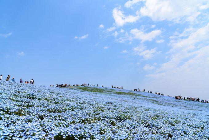 【花】見納めの花と見頃を迎える花、どちらを見る?
