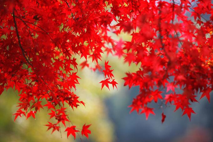 京都旅行のスケジュールで気をつけたいこと