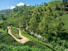 スリランカ旅行は何泊がおすすめ?おすすめ旅行日数を解説