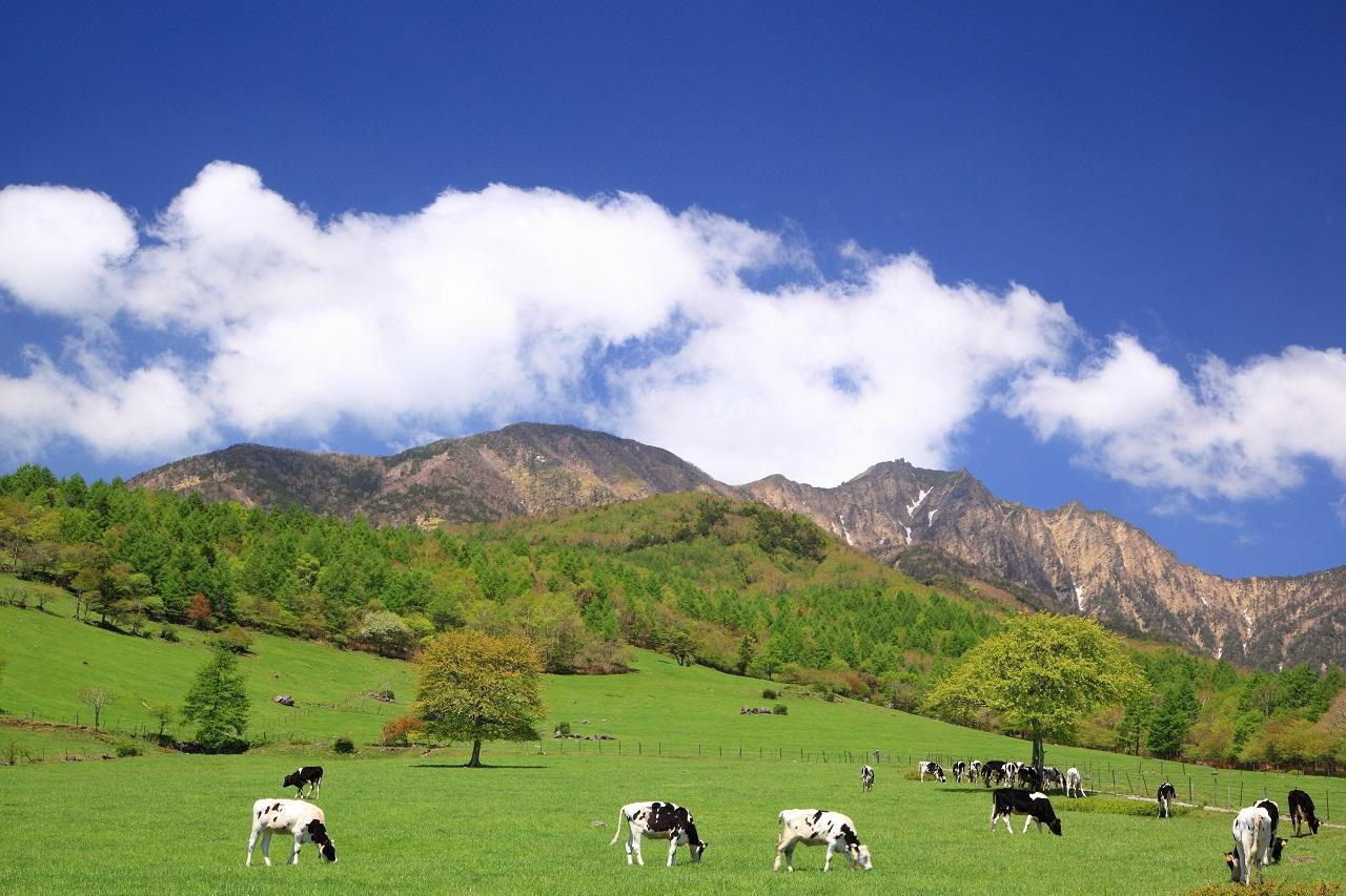 清里高原に行くなら何泊必要?おすすめ日数・過ごし方を紹介