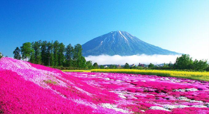 北海道周遊するなら9泊10日