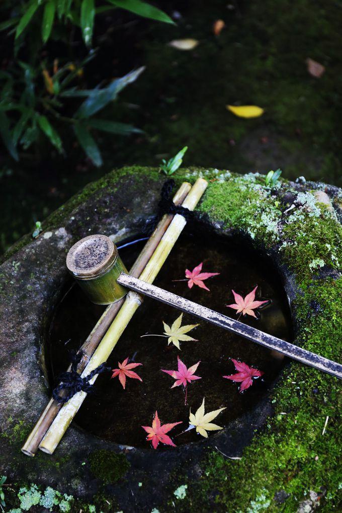 日本庭園の三大様式その3「露地」について