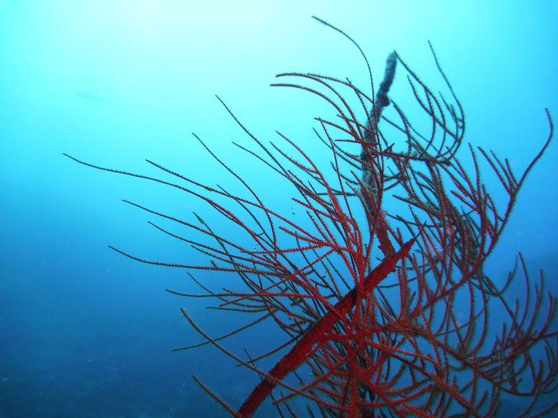 潜るならドコ?ライセンスとは?沖縄ダイビングの基礎知識