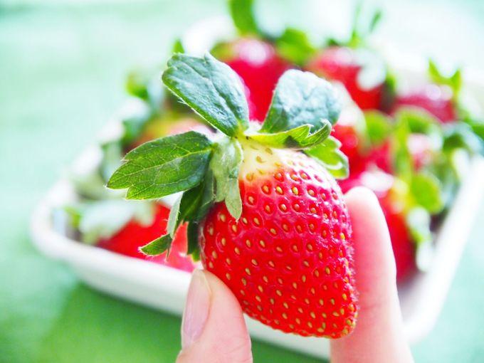 最盛期にイチゴ食べ比べ!