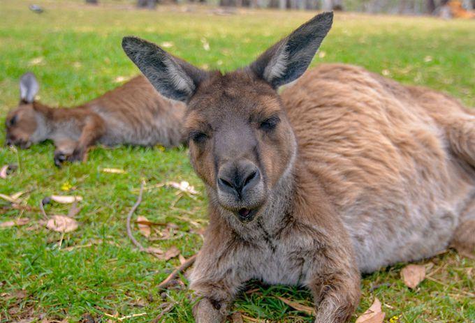 オーストラリア滞在のツアー代金の相場は?