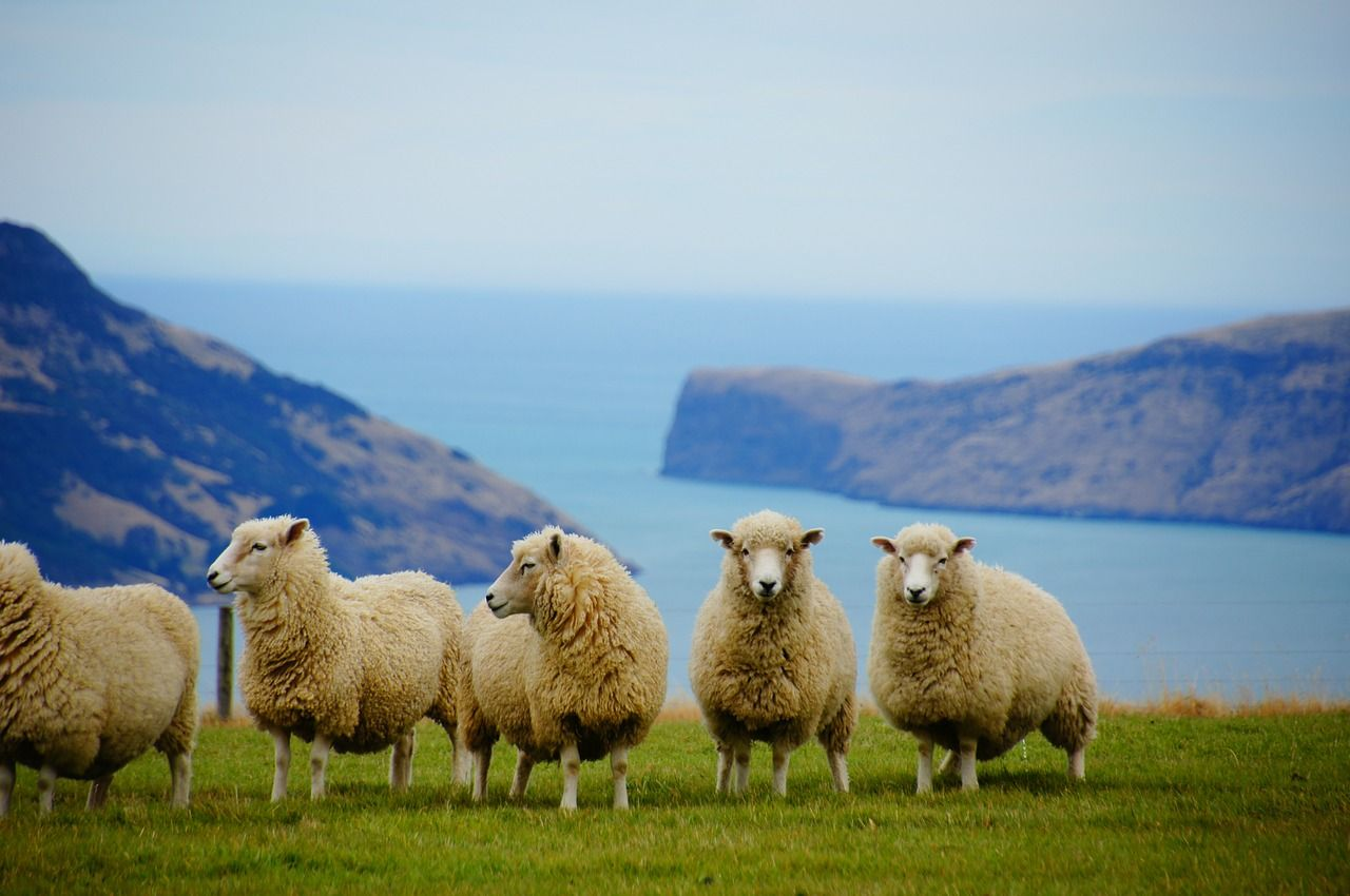 ニュージーランド旅行はパッケージツアーがお得!