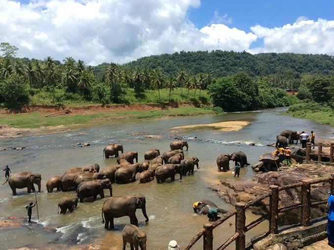 スリランカ魅力の主要観光地をご紹介
